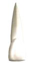 天然歯のイメージ